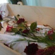 Bloemen in de kist